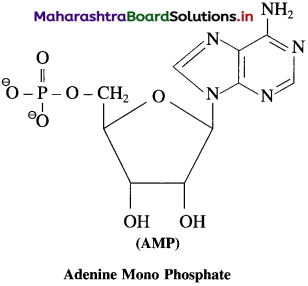 Maharashtra Board Class 12 Chemistry Solutions Chapter 14 Biomolecules 105