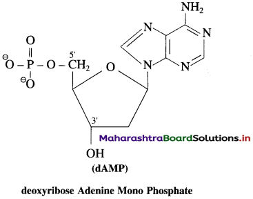 Maharashtra Board Class 12 Chemistry Solutions Chapter 14 Biomolecules 106