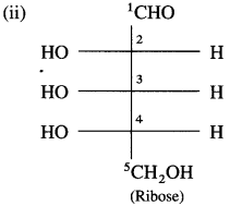 Maharashtra Board Class 12 Chemistry Solutions Chapter 14 Biomolecules 22