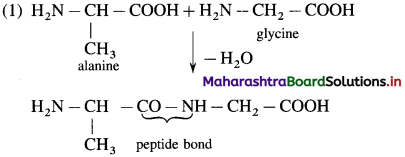 Maharashtra Board Class 12 Chemistry Solutions Chapter 14 Biomolecules 66