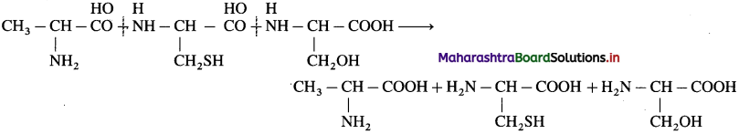Maharashtra Board Class 12 Chemistry Solutions Chapter 14 Biomolecules 72