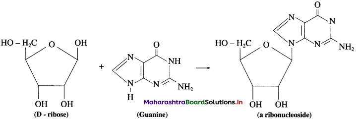 Maharashtra Board Class 12 Chemistry Solutions Chapter 14 Biomolecules 93