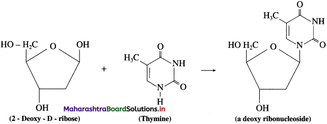 Maharashtra Board Class 12 Chemistry Solutions Chapter 14 Biomolecules 94
